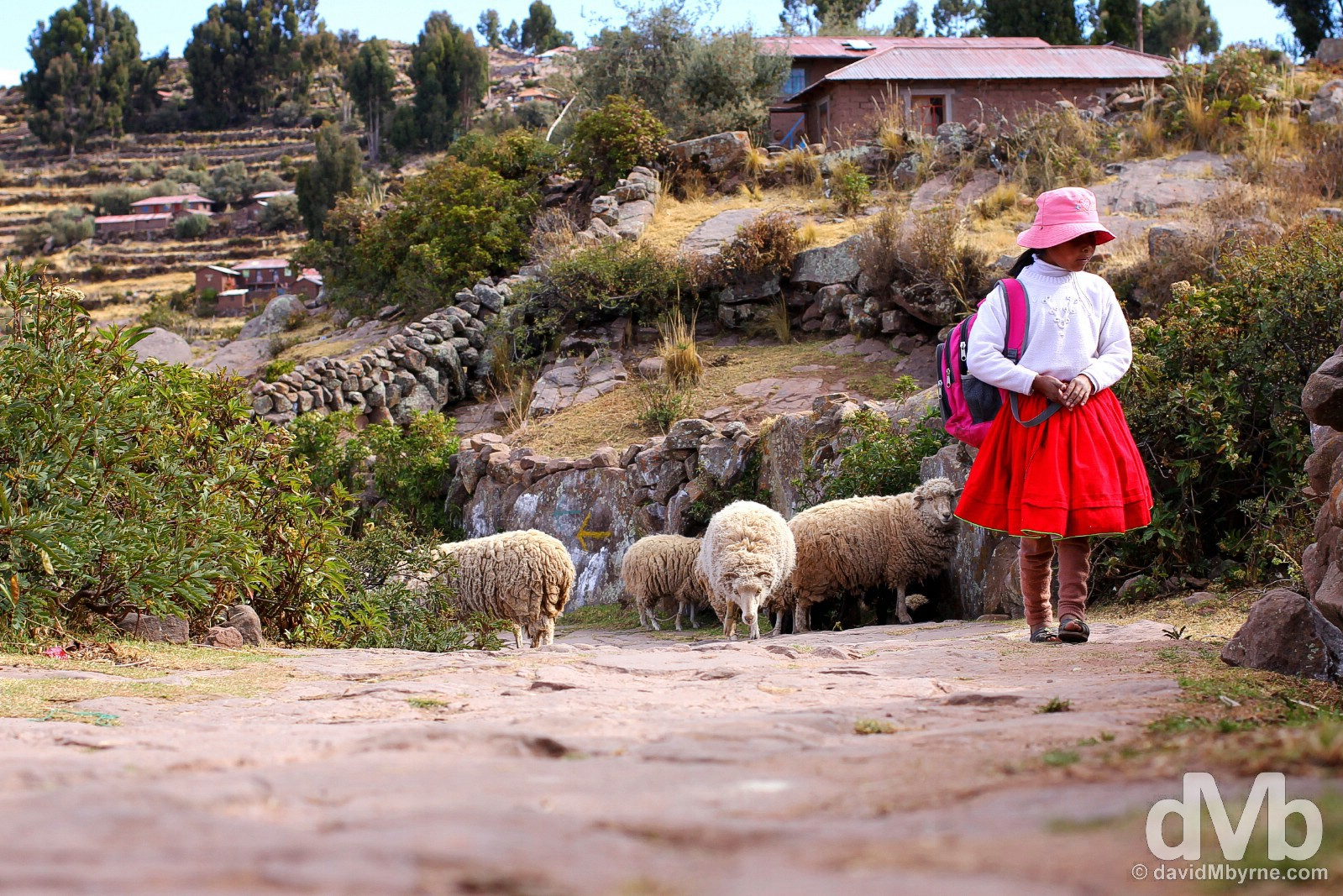 A girl & sheep on path on Taquile Island, Lake Titicaca, Peru. August 20, 2015.