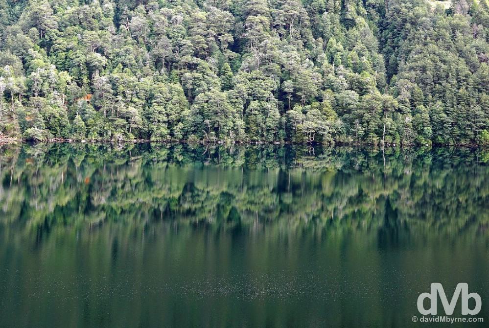 Reflections on Lago Tinquilco in Parque Nacional Huerquehue, Lake District, Chile. October 12, 2015.