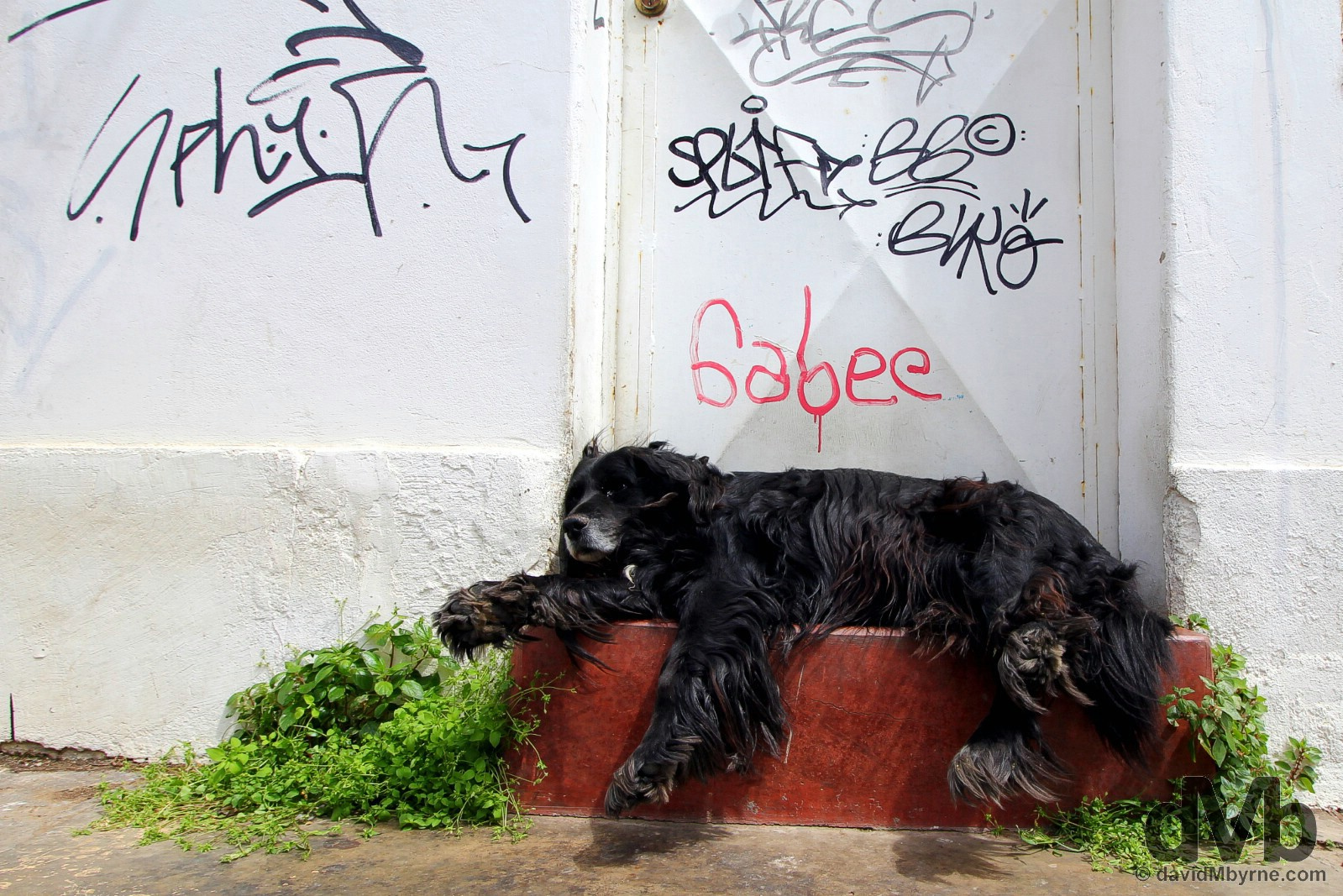 Dog tired in Valparaiso, Chile. October 8, 2015.