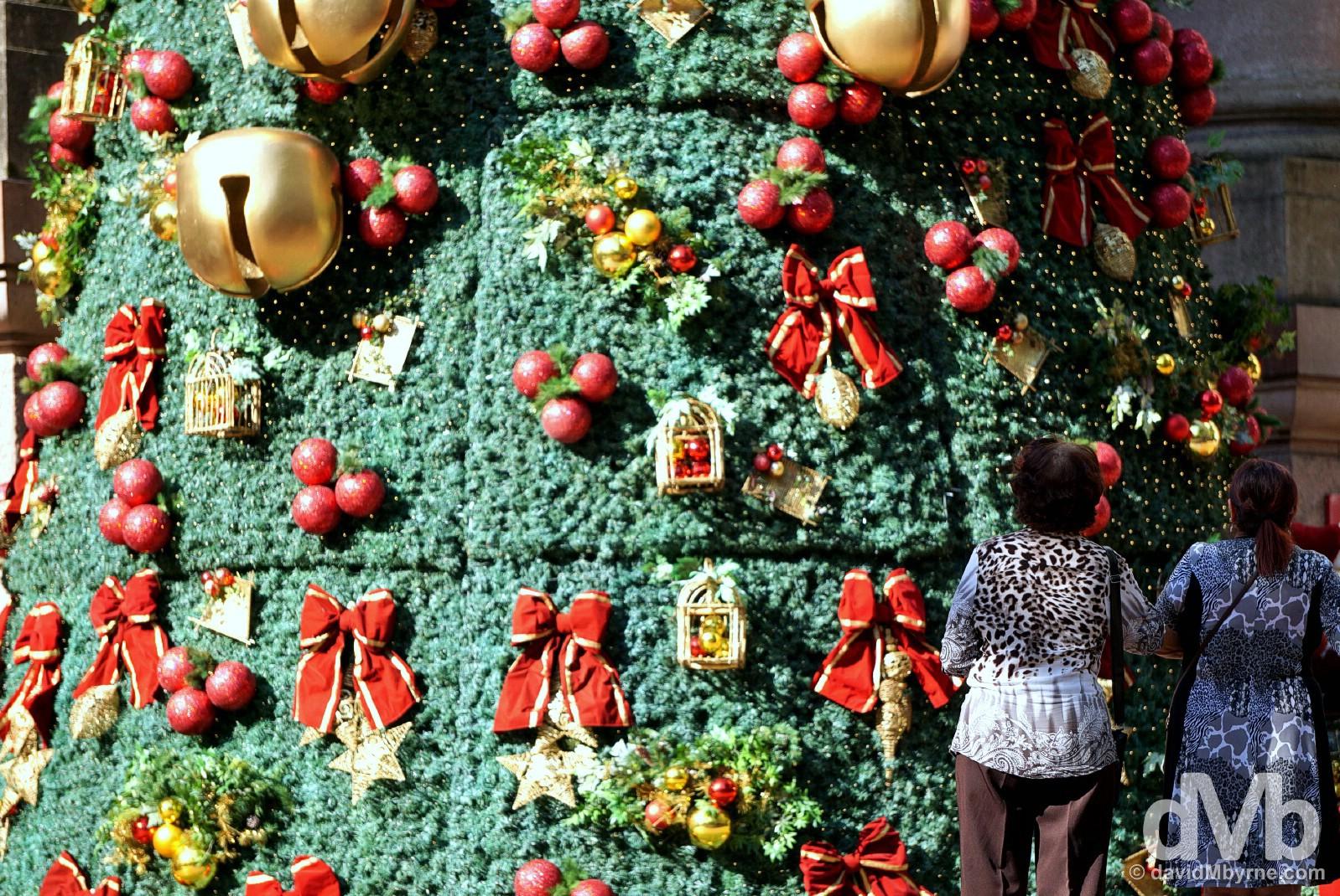 Admiring the massive Christmas tree in Alfandega Square in central Porto Alegre, Brazil. December 8, 2015.