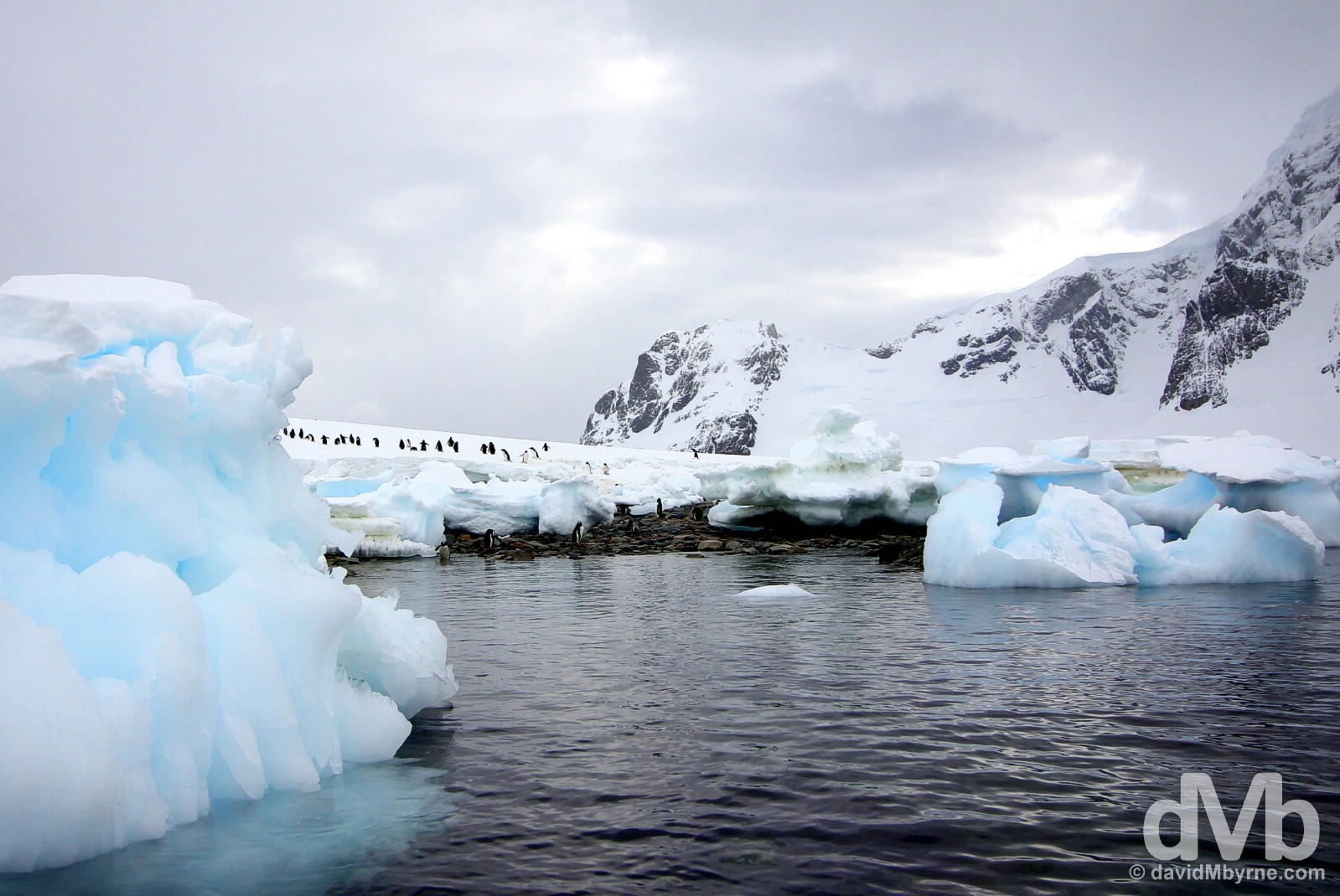 Danco Island, Antarctic Peninsula. November 30, 2015.