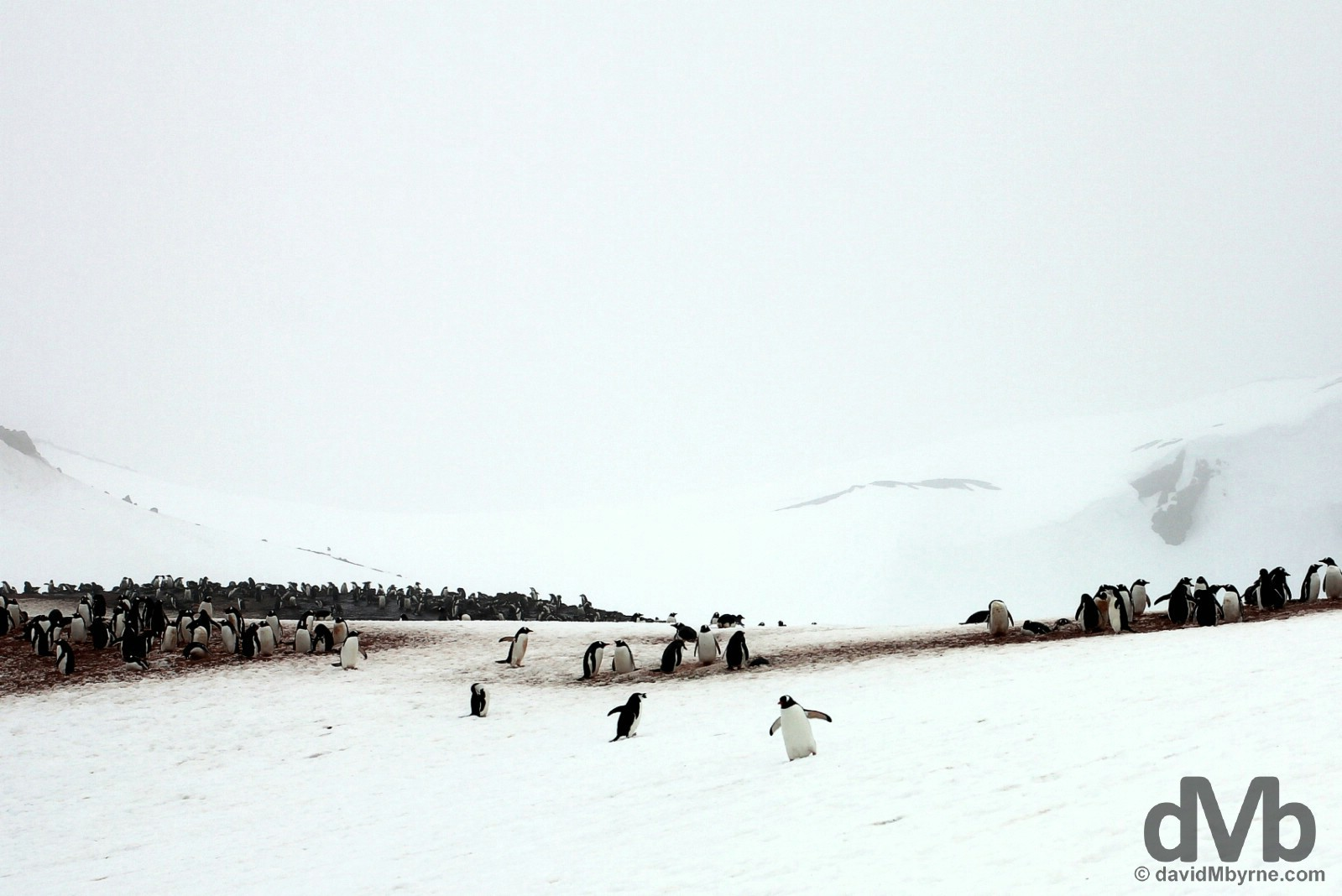 A penguin rookery on Barrientos Island of the Aitcho Island group of the South Shetland Islands, Antarctica. November 28, 2015.