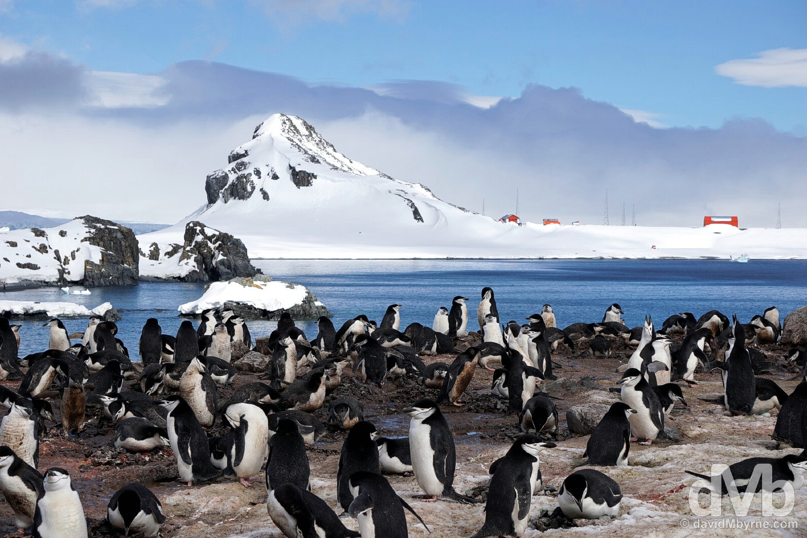 A Chinstrap penguin rookery on Half Moon Island, South Shetland Islands, Antarctica. November 29, 2015.
