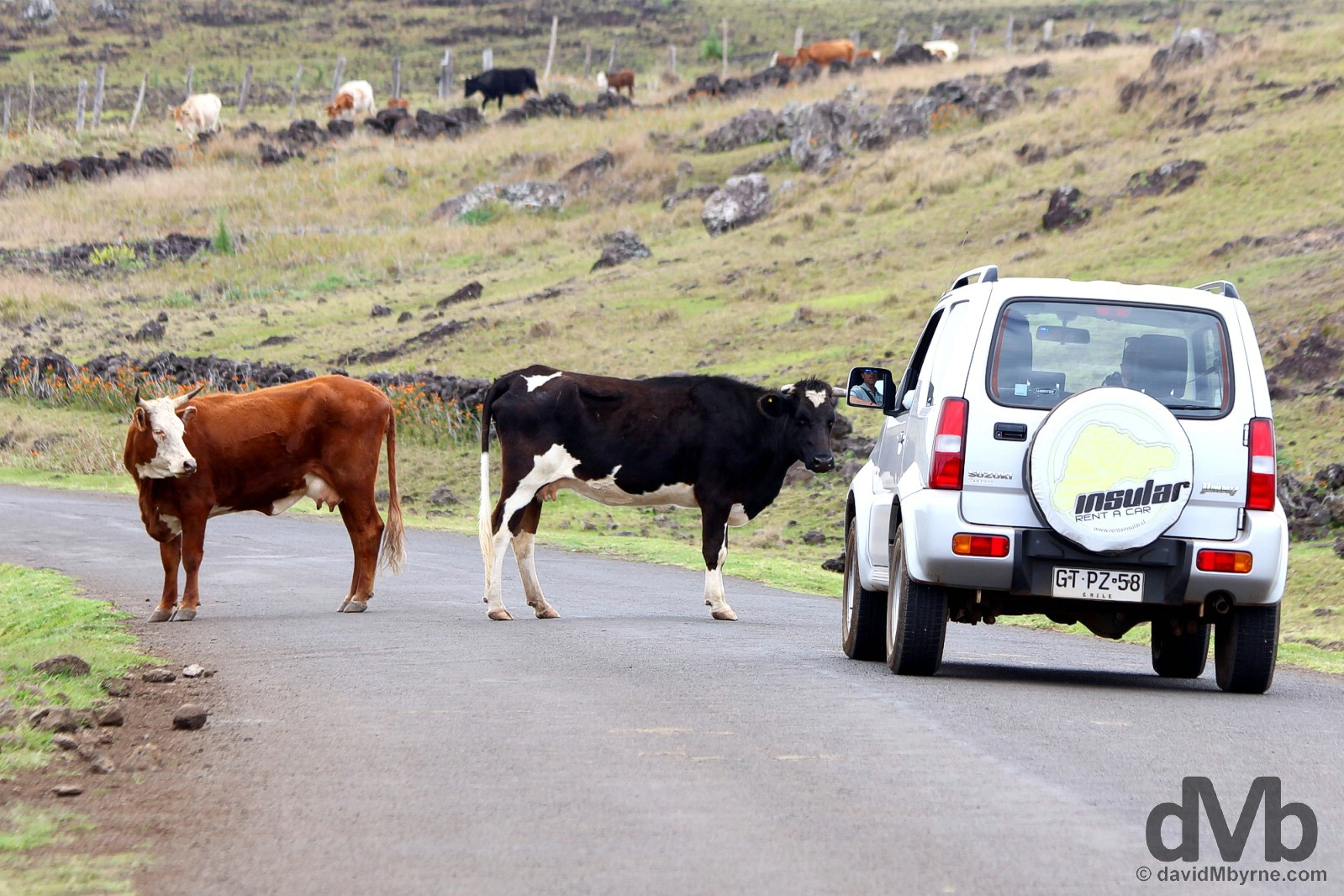 Sharing the roads of Easter Island, Chile. September 29, 2016.