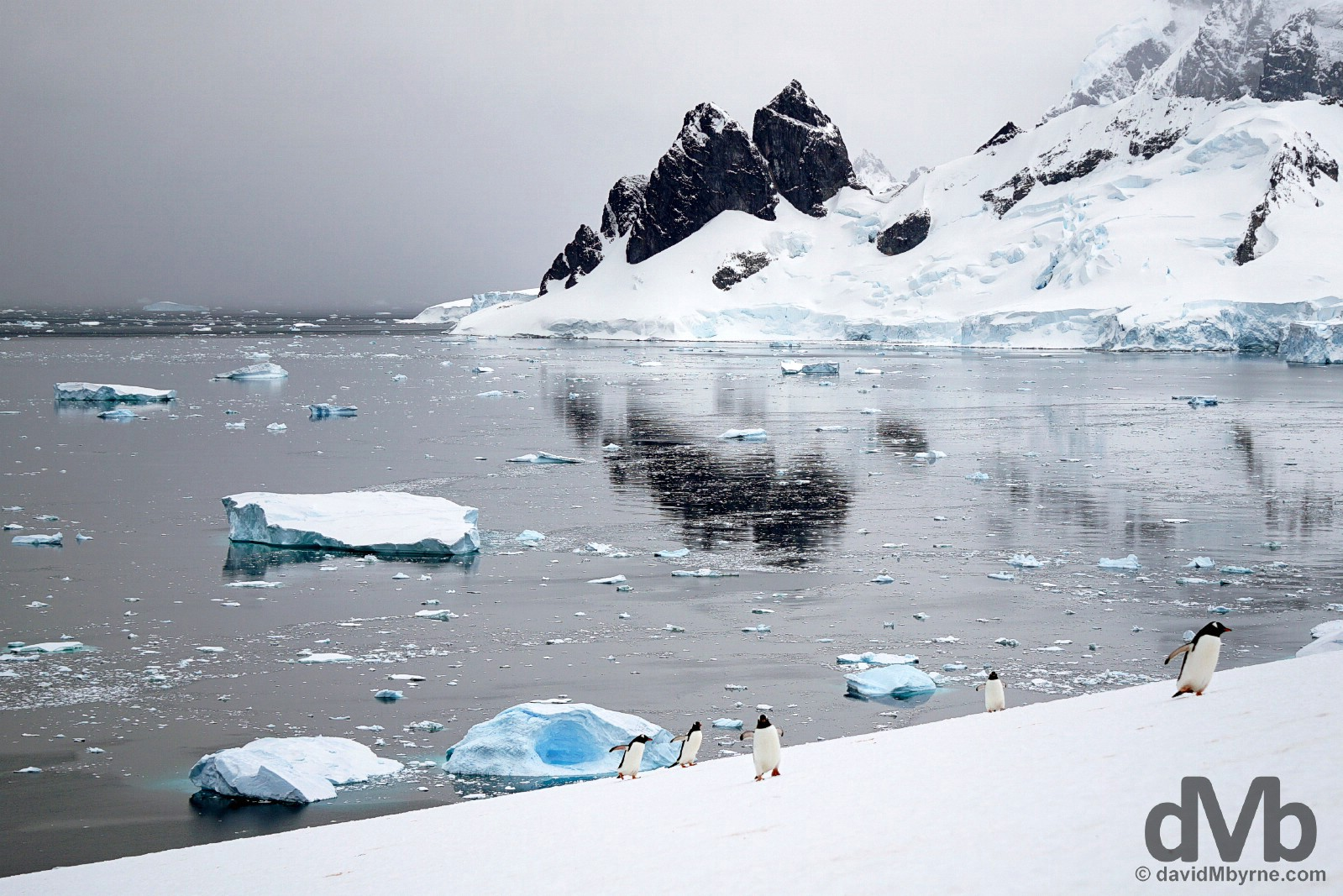 Danco Island, Antarctica. December 2, 2015.