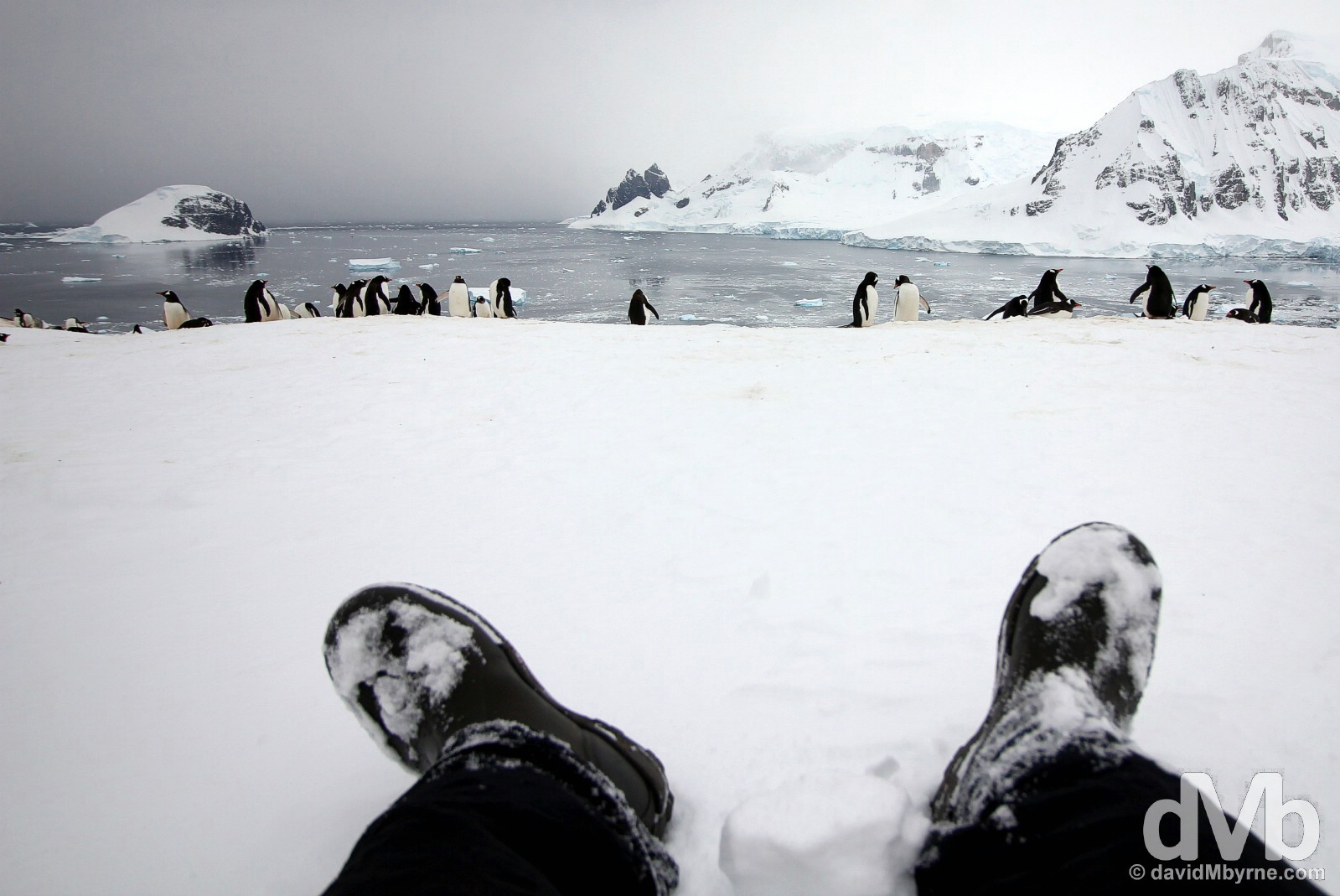 Hanging with the penguins on Danco Island, Antarctica. December 2, 2015.