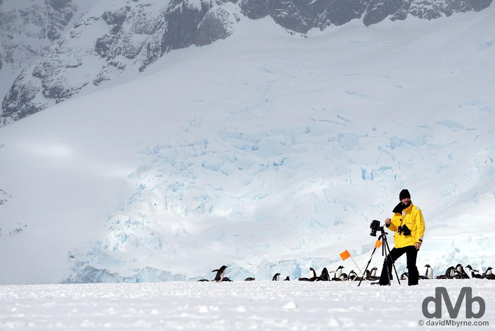 Cuverville Island, Antarctic Peninsula. December 1, 2015.