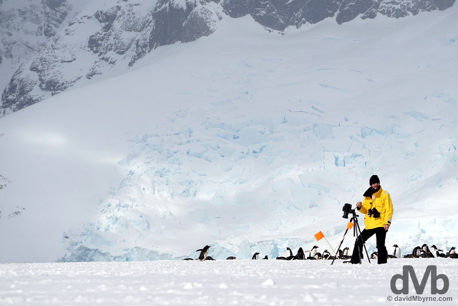 Cuverville Island, Antarctic Peninsula. December 1, 2015.