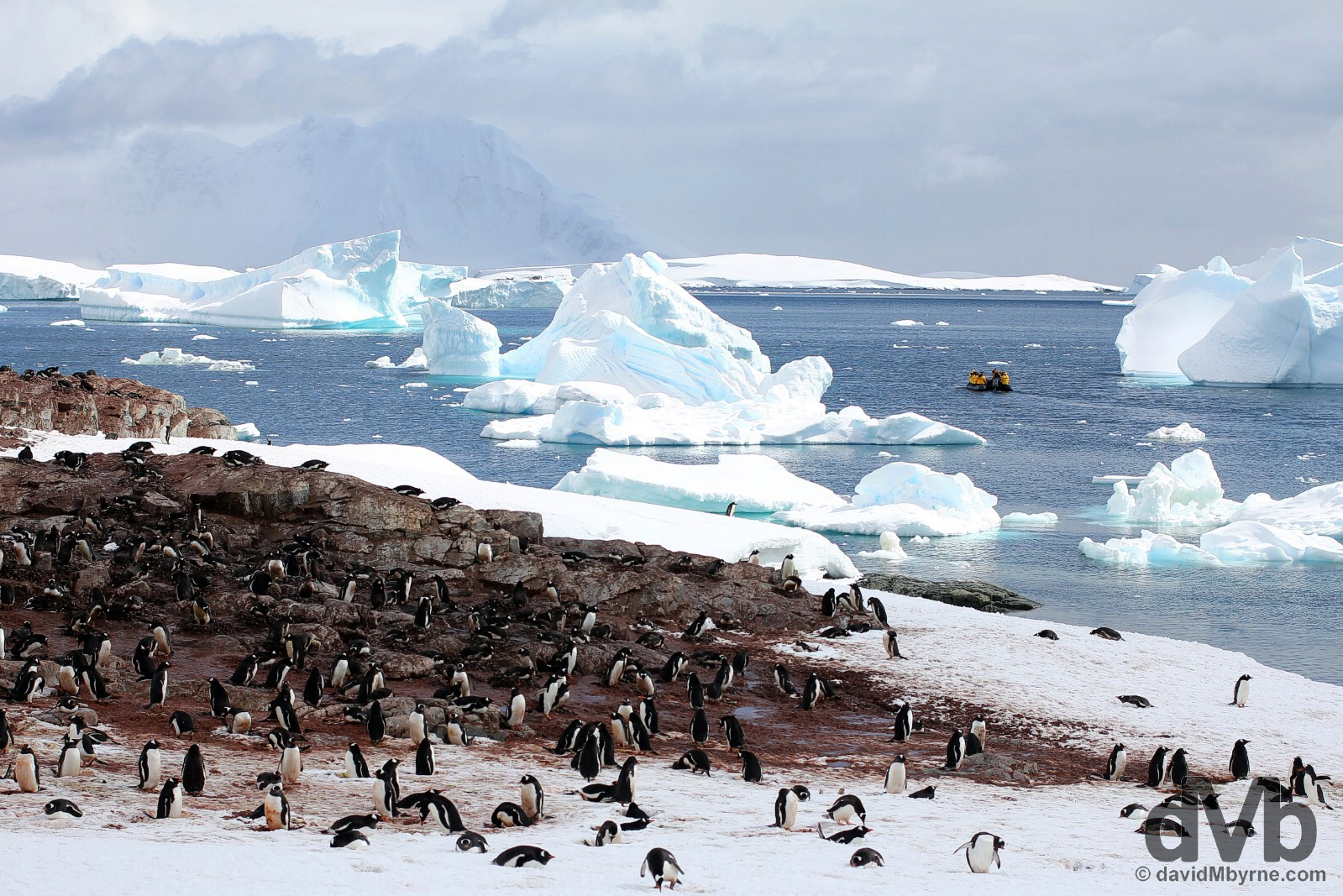 A penguin rookery on Cuverville Island, Antarctica. December 1, 2015.
