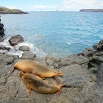Sea Lions on Isla Seymour Norte, Galapagos Islands, Ecuador. July 18, 2015.