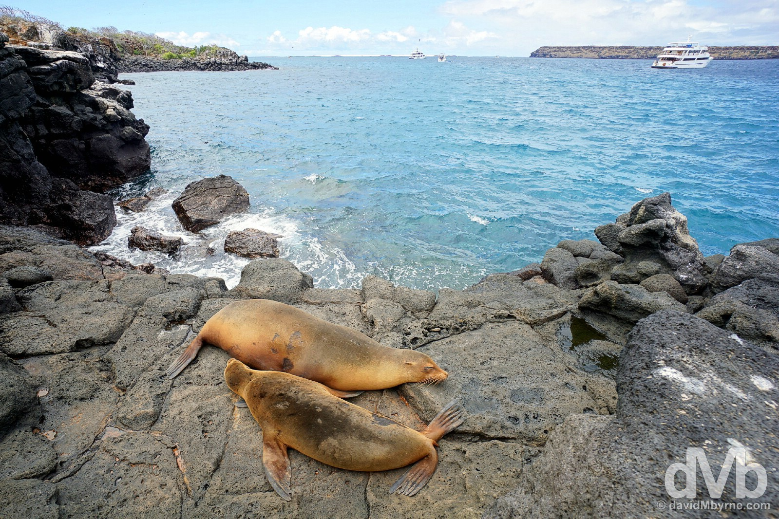 Sea Lions on Isla Seymour Norte, Galapagos Islands, Ecuador. July 18, 2015.