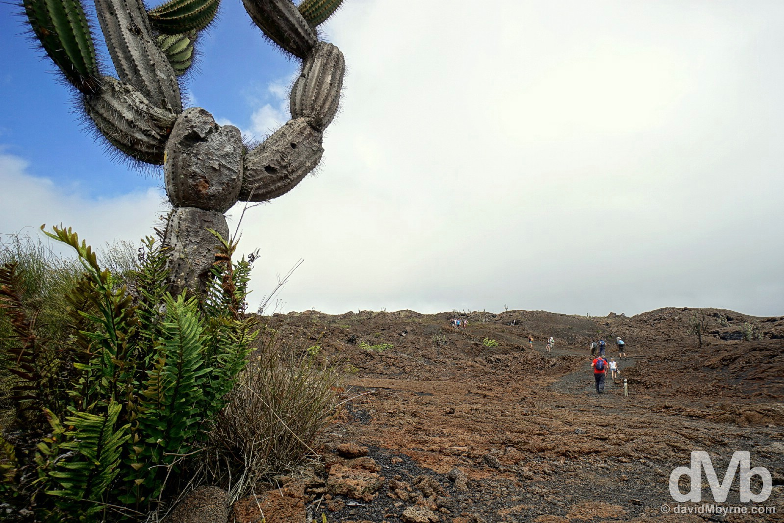 Volcanic topography on Volcan Chico, Isla Isabela, Galapagos Islands, Ecuador. July 20, 2015.