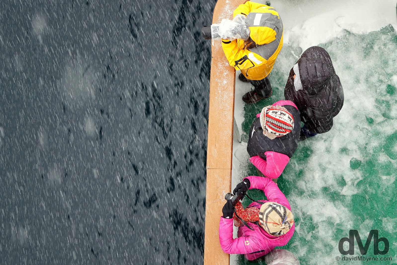 Whale watching in the driving snow off the deck of the M/V Ocean Endeavour in Wilhelmina Bay, Antarctica. December 2, 2015.