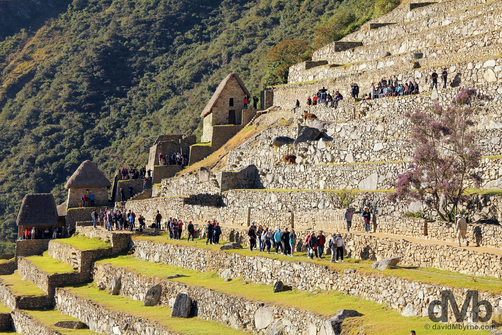 Shortly after sunrise on the terraces of the Eastern Agricultural Sector in Machu Picchu, Peru. August 15, 2015.