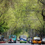A leafy street in Mendoza, Argentina. September 25, 2015.