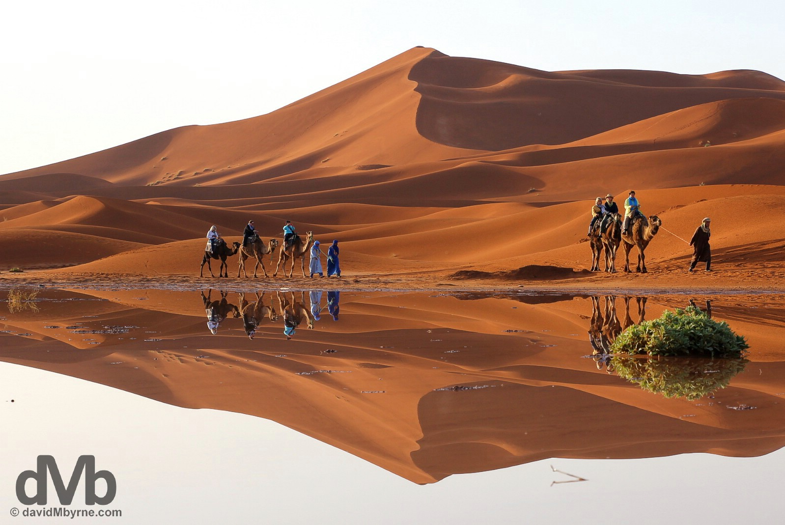 A sunrise camel train reflection among the dunes of Erg Chebbi, southeastern Morocco. May 19, 2014.
