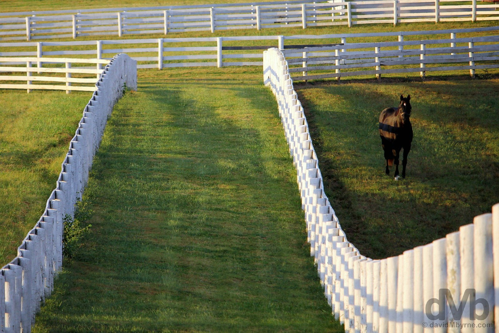 Late afternoon shadows at Calumet Farm in Lexington, Kentucky, USA. September 26, 2016.