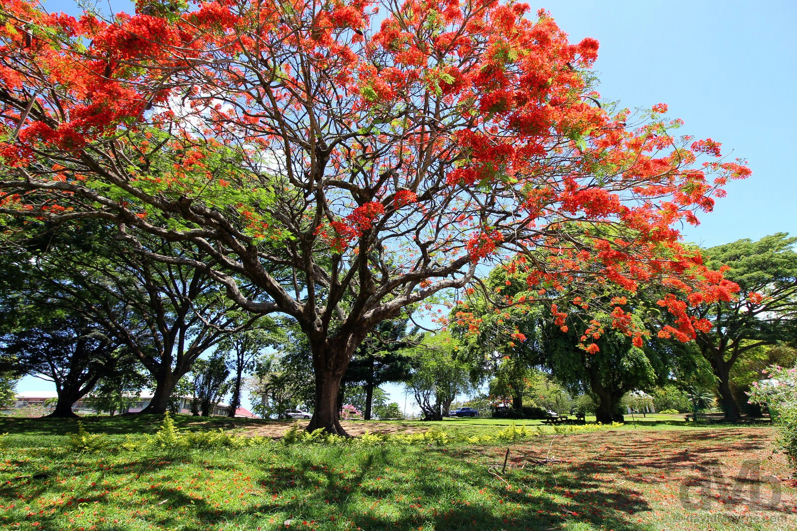 Dominica Botanical Gardens, Roseau, Dominica, Lesser Antilles. June 10, 2015.